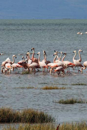 Flamingos-1060154 kopie